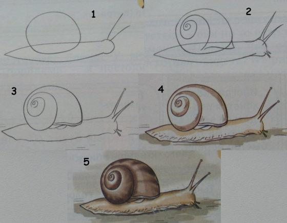 Art for children learn to draw a snail drawing lessons for Learning to paint and draw