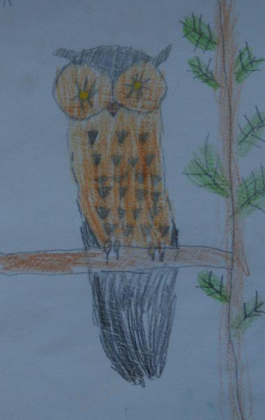 how to draw an owl step by step for beginners