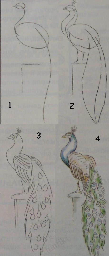 Kids art. Drawing lessons for beginners - A PEACOCK / How ...